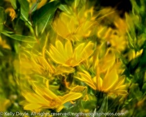 Abstract Yellow Neon Flowers