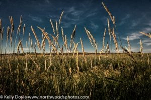 Tall Grass Prairie Texture