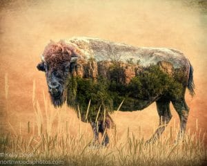 Blue Mounds Bison Double Exposure