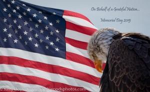 Bald Eagle & American Flag, Memorial Day