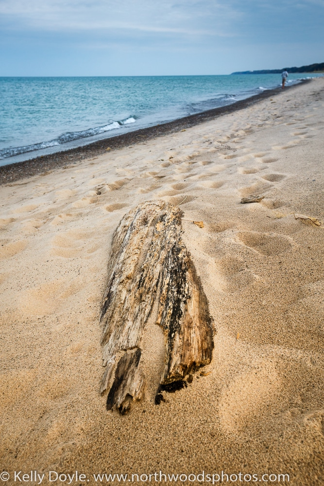 Lake Michigan Driftwood