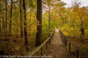 Warren Woods Autumn Forest