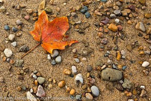 Maple Leaf, Lake Michigan Beach
