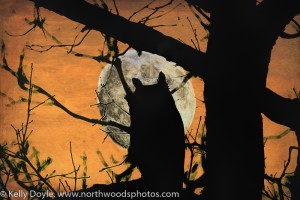Great Horned Owl Silhouette Moon