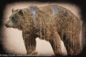 Grizzly Forest Double Exposure