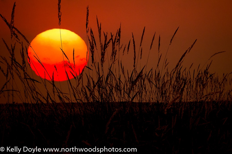 Tallgrass Prairie Sunrise